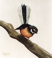 Fantail painting by Daniel Reeve