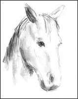 Chief, the movie horse - charcoal